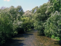 Rieka Revúca
